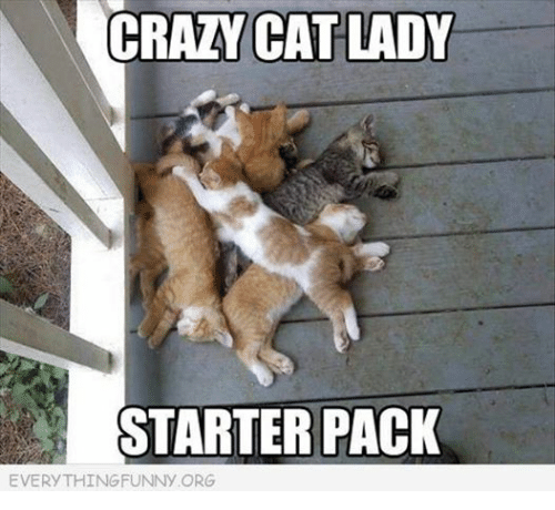 Cats, Crazy, and Starter Packs: CRAZY CAT LADY  STARTER PACK  EVERYTHINGFUNNY ORG