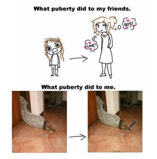 What Puberty Did To Me
