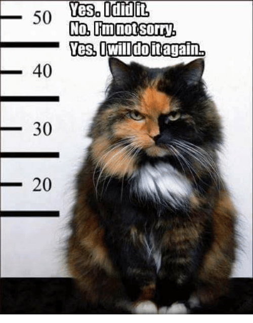 Sorry, Grumpy Cat, and Yes: Yes it  so Vesa sorry  No, not 50  Yes,  doitagain.  40  30  20