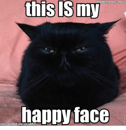 Cats, Facebook, and Grumpy Cat: cataddictsanony-mouse  this my  happy face  www.facebook.com/cat.addicts