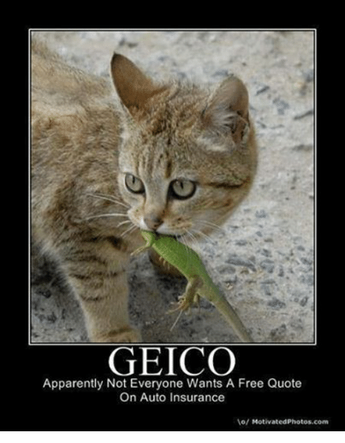 Gieco Quote Adorable Geico Apparently Not Everyone Wants A Free Quote On Auto Insurance