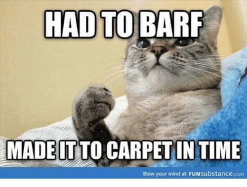 Grumpy Cat, Time, and Mind: HAD TO BARF  MADE TO CARPET IN TIME  IT  Blow your mind at FUNsubstance.com
