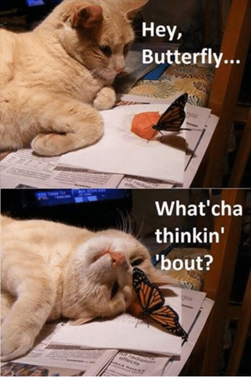 Whatcha Thinkin