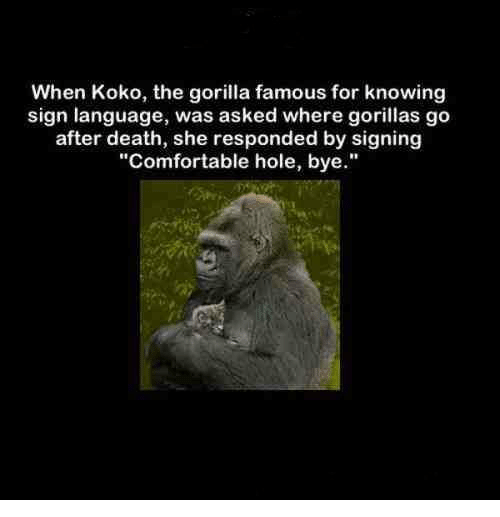 When Koko The Gorilla Famous For Knowing Sign Language Was