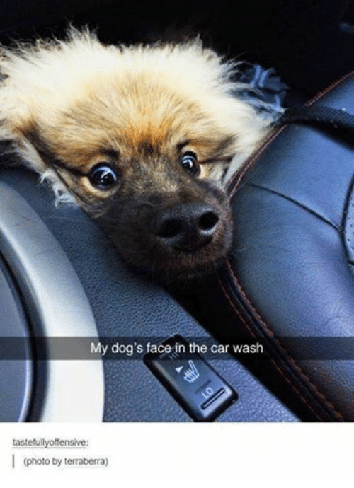 Cars, Dogs, and Funny: My dog's face in the car wash  tastefu  ffensive  (photo by terraberra)