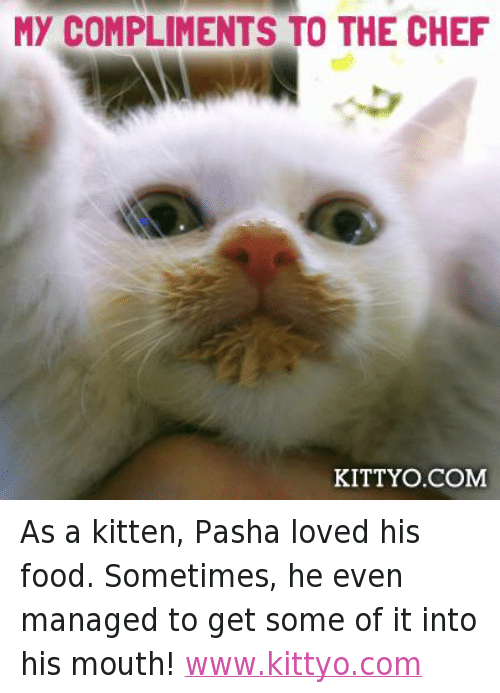 Facebook As a kitten Pasha loved his abdfcb my compliments to the chef kitty o com as a kitten pasha loved his,Compliments To The Chef Meme