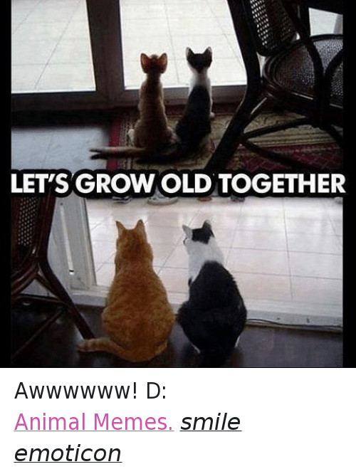 Animals, Anime, and Meme: LET'S GROWOLD TOGETHER Awwwwww! D:  Animal Memes. smile emoticon