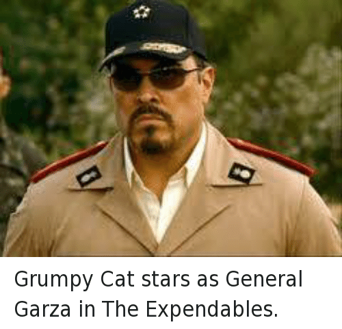 Cats, Grumpy Cat, and Star: Grumpy Cat stars as General Garza in The Expendables.
