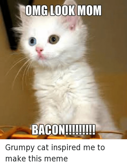 Cats, Meme, and Memes: OMG LOOK MOM  BACONII!!!IT Grumpy cat inspired me to make this meme