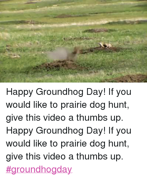 Dogs, Ups, and Videos: Happy Groundhog Day! If you would like to prairie dog hunt, give this video a thumbs up.Happy Groundhog Day! If you would like to prairie dog hunt, give this video a thumbs up. #groundhogday