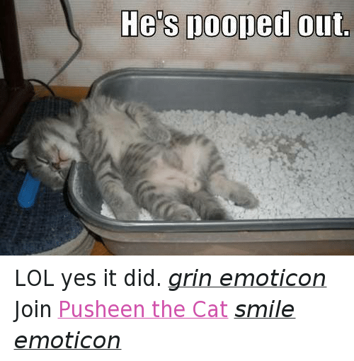 Cats, Lol, and Poop: He's pooped out LOL yes it did. grin emoticon  Join Pusheen the Cat smile emoticon
