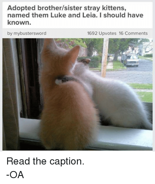Sister, Sister, Star Wars, and Kittens: Adopted brother/sister stray kittens,  named them Luke and Leia. I should have  known.  by mybustersword  1692 Upvotes 16 Comments Read the caption. -OA