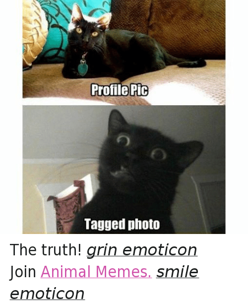 Animals, Anime, and Meme: Profile Pic  Tagged photo The truth! grin emoticon  Join Animal Memes. smile emoticon