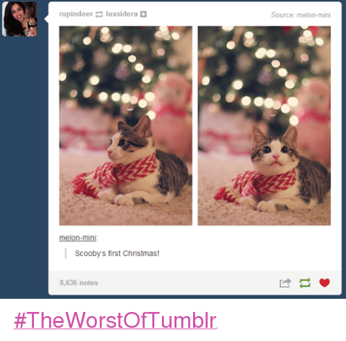 Christmas, Funny, and Tumblr: rupindeer uxsidera melon-mini Scooby's first Christmas!