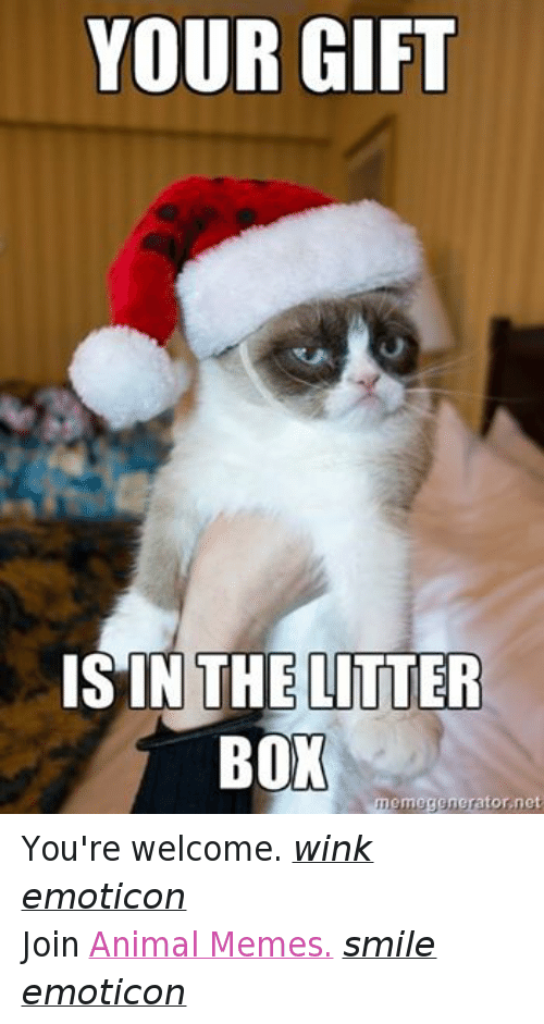 Animals, Anime, and Boxing: YOUR GIFT  IS IN THE LITTER  BOX  memegenerator.net You're welcome. wink emoticon  Join Animal Memes. smile emoticon
