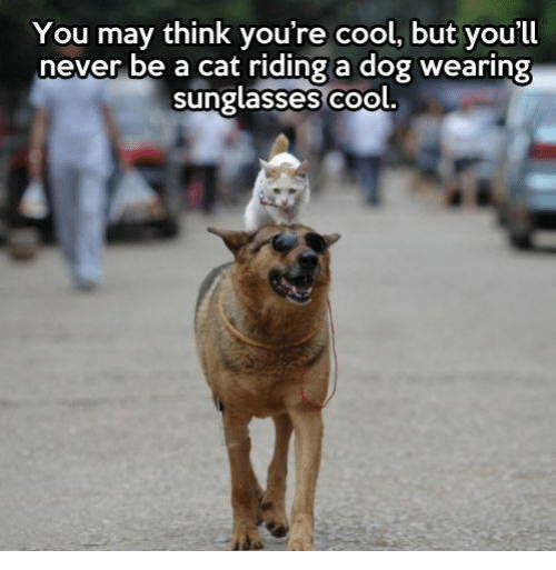 wearing sunglasses