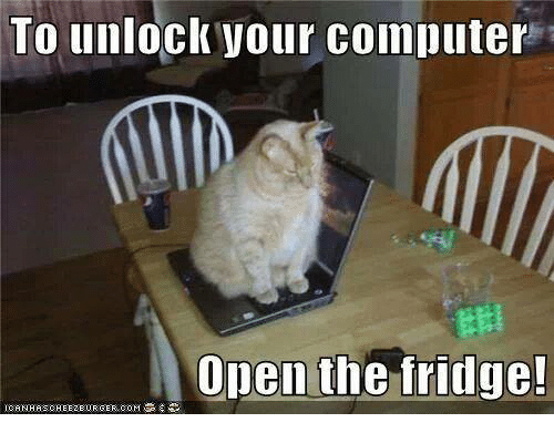 Image result for IMAGES where is the computer cat???