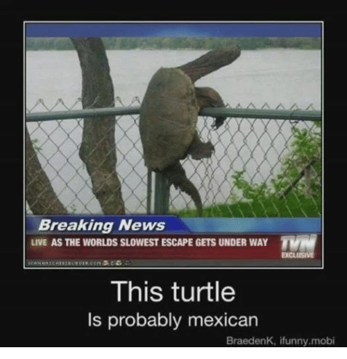News, Break, and Breaking News: Breaking News  LIVE AS THE WORLDS SLOWEST ESCAPE GETS UNDER WAY  TVN  EXCLUSIVE  This turtle  ls probably mexican  BraedenK, ifunny.mobi