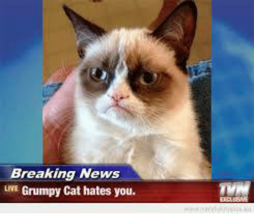 Cats, News, and Grumpy Cat: Breaking News  UNE Grumpy Cat hates you.