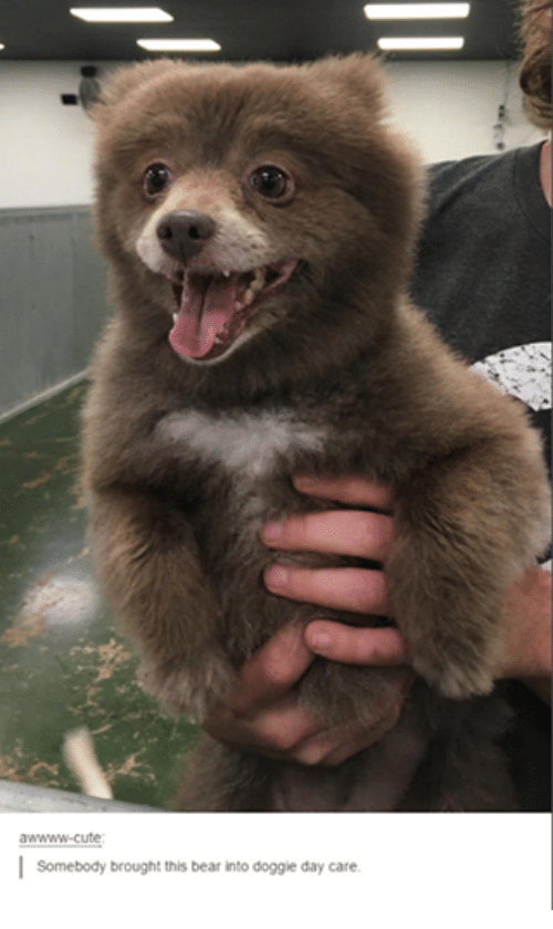 Cute, Funny, and Tumblr: awwww-cute  I  Somebody brought this bear into doggie day care.