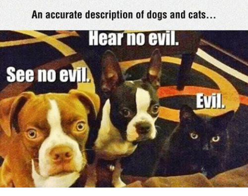 dog-and-cats