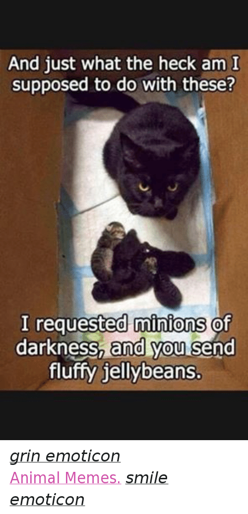 Animals, Anime, and Meme: And just what the heck am I  supposed to do with these?  I requested minions  of  darkness, and you  send  fluffy jellybeans. grin emoticon  Animal Memes. smile emoticon