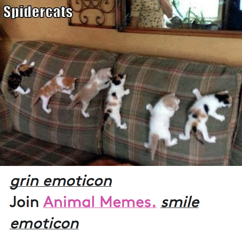 Animals, Anime, and Meme: Slidercats grin emoticon  Join Animal Memes. smile emoticon