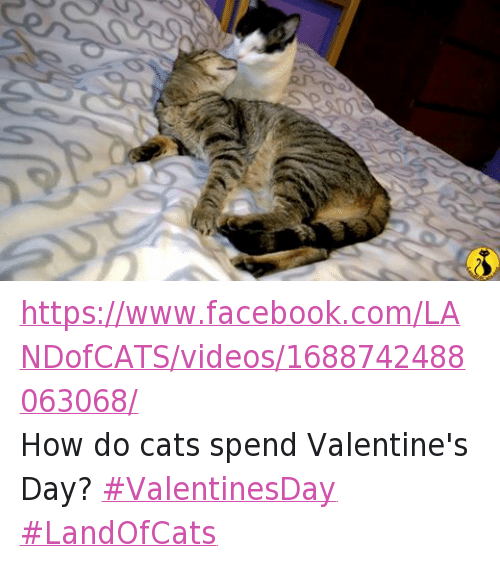 25 Best Memes About Grumpy Cat Valentine S Day Videos And