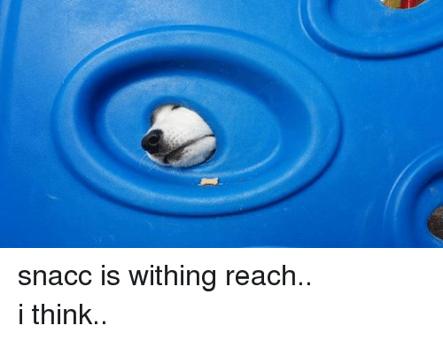 Dank Memes, I Think, and Reaching: snacc is withing reach..  i think..