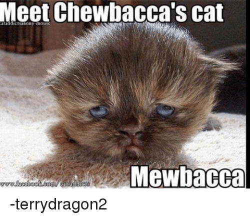 Cats, Chewbacca, and Star Wars: Meet Chewbacca's cat  MGewbacca -terrydragon2