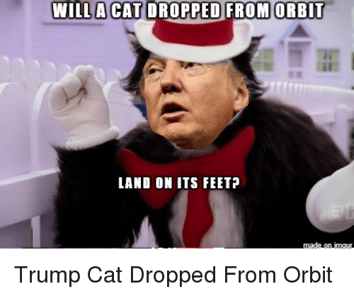 Willa Cat Dropped From Orbit Land On Its Feet Trump Cat Dropped