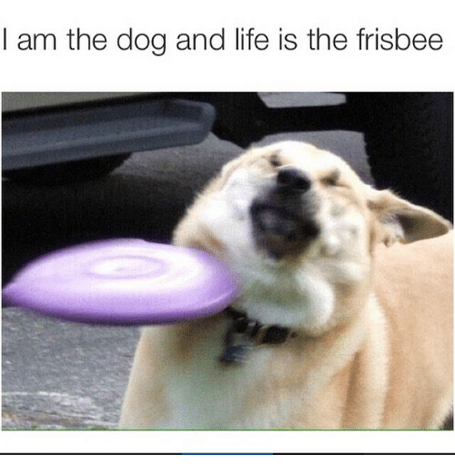 Instagram 9fa681 i am the dog and life is the frisbee dogs meme on me me