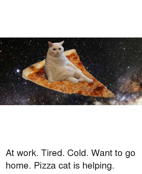 Instagram At work Tired Cold Want to 9c1e1e at work tired cold want to go home pizza cat is helping cats
