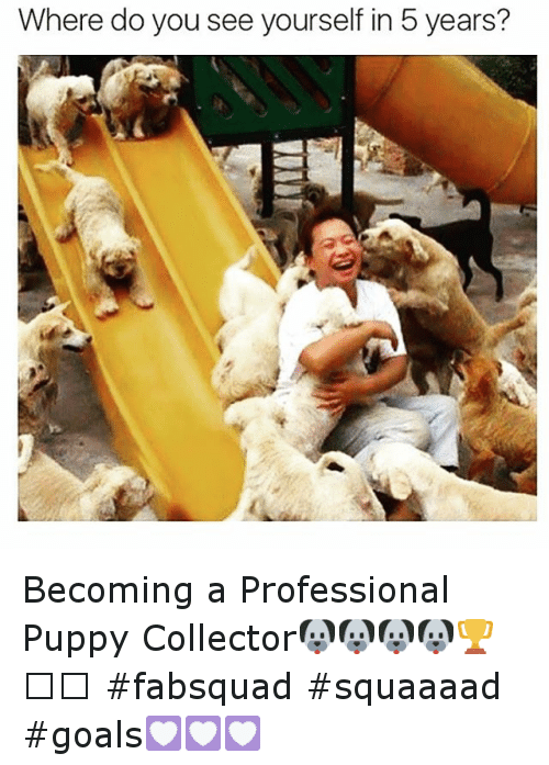 funny puppies and puppy where do you see yourself in 5 years