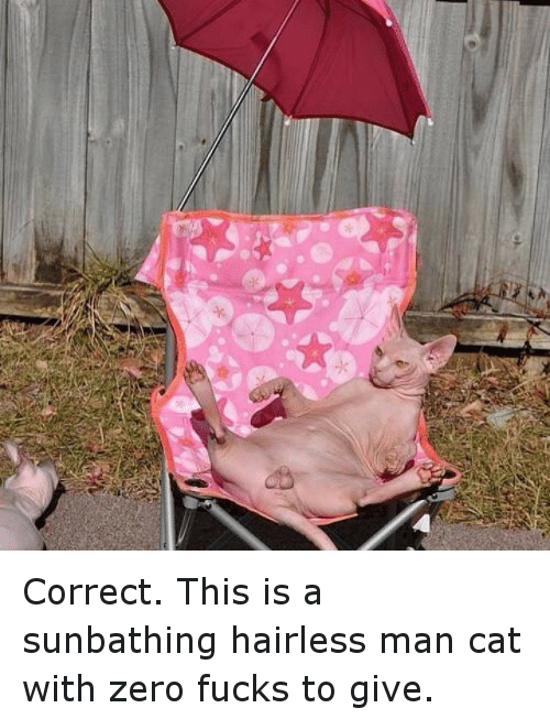 Correct This Is A Sunbathing Hairless Man Cat With Zero Fucks To