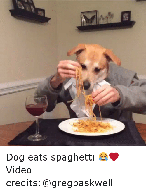 Dog Eats Spaghetti Video Credits Gregbaskwell Dogs Meme