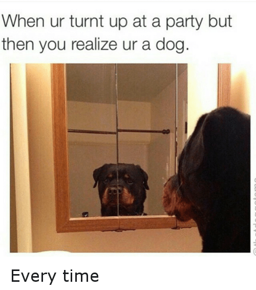 When Ur Turnt Up At A Party But Then You Realize Ur A Dog Every Time