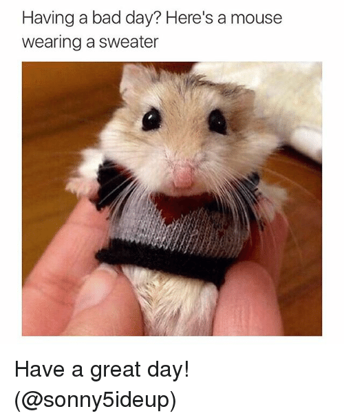 Bad, Bad Day, and Funny: Having a bad day? Here's a mouse  wearing a sweater Have a great day! (@sonny5ideup)