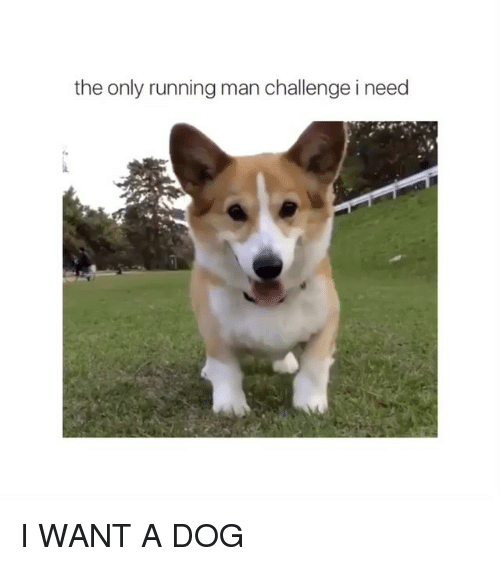 Dogs, Run, and Girl Memes: the only running man challenge i need I WANT A DOG