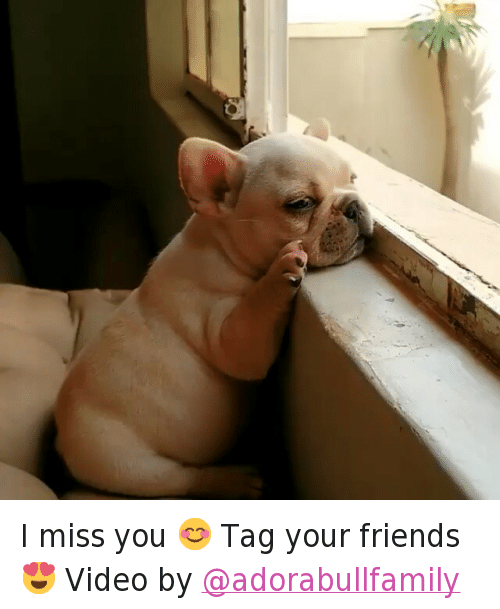 I Miss You Tag Your Friends Video By Animals Meme On Meme