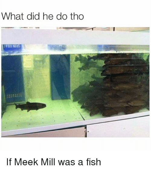 Funny, Meek Mill, and Fish: What did he do tho If Meek Mill was a fish