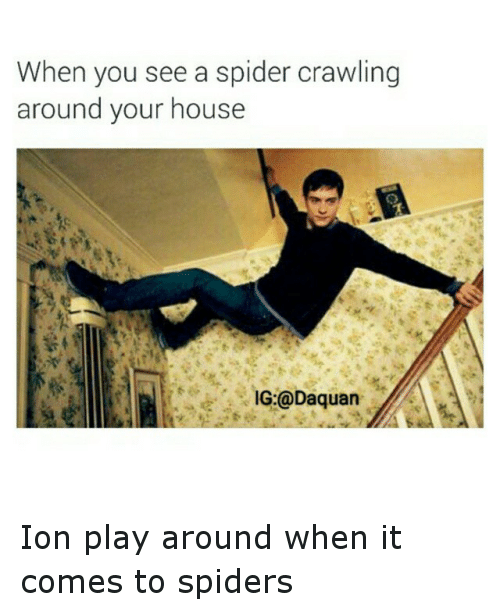 Daquan, Funny, and Spider: When you see a spider crawling  around your house  IG:@Daquan Ion play around when it comes to spiders