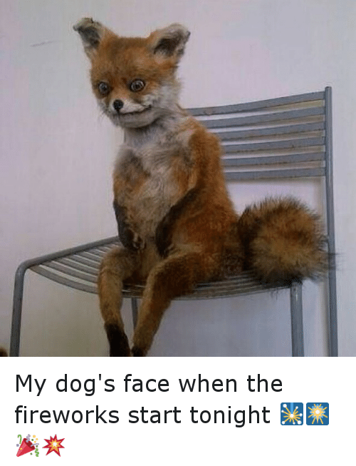 Instagram My dogs face when the fireworks 5fe269 ✅ 25 best memes about dogs dogs memes,Funny Dog Face Meme
