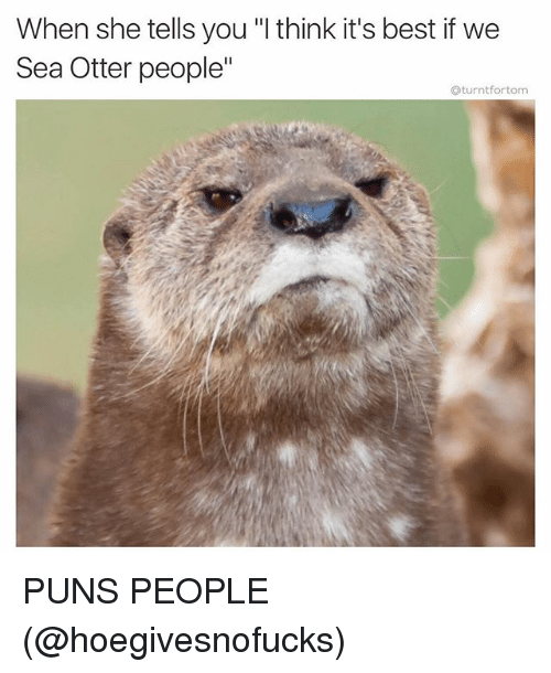 "Funny, Otters, and Puns: When she tells you ""l think it's best if we  Sea Otter people""  aturntfortom PUNS PEOPLE (@hoegivesnofucks)"