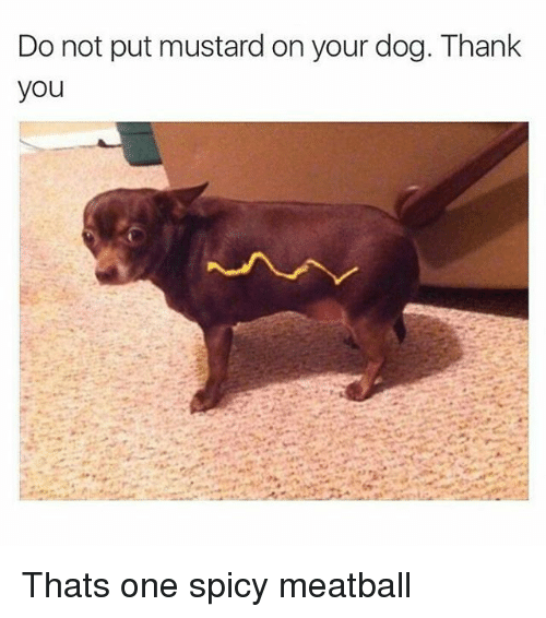 Instagram Thats one spicy meatball cc27a6 do not put mustard on your dog thank you thats one spicy meatball,Dank Memes Dog