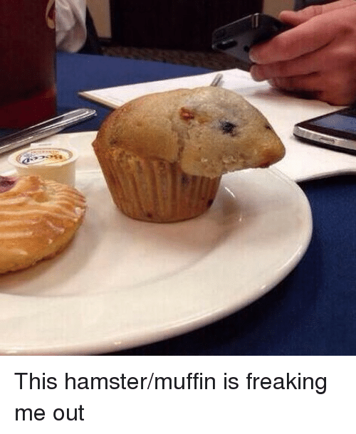 Instagram This hamster muffin is freaking me out f5c386 ✅ 25 best memes about pastramis pastramis memes