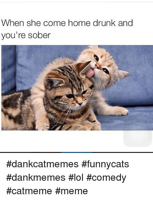 Cats, Drunk, and Lol: When she come home drunk and  you're sober dankcatmemes funnycats dankmemes lol comedy catmeme meme