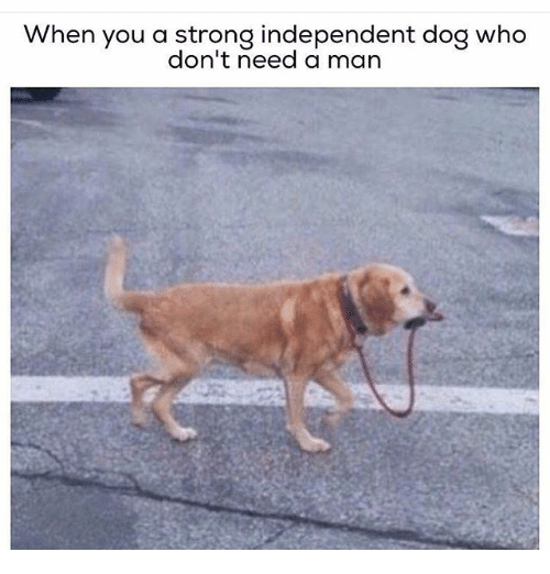 Instagram f5f6bc when you a strong independent dog who don't need a man dogs meme