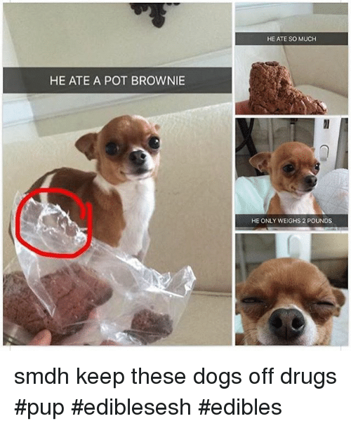 Instagram smdh keep these dogs off drugs 485964 he ate a pot brownie he ate so much he only weighs 2 pounds smdh,Dank Memes Dog