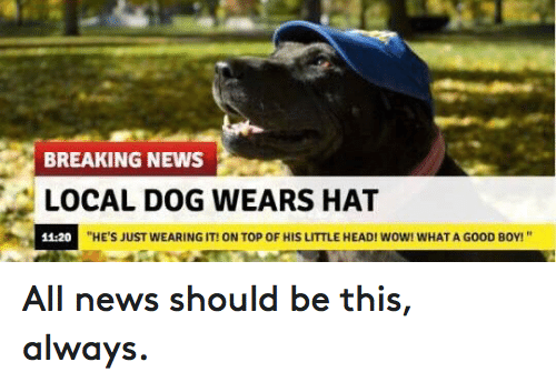 """Dogs, Funny, and Head: BREAKING NEWS  LOCAL DOG WEARS HAT  """"HE'S JUST WEARING IT! ON TOP OF HIS LITTLE HEAD! WOW! WHAT A G00D B0Y!""""  11:20 All news should be this, always."""